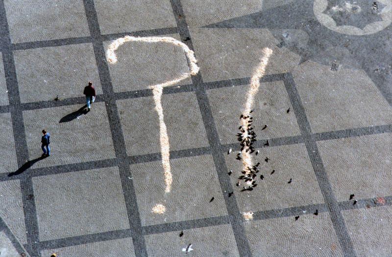 Pigeon/Bread art